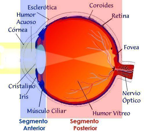 vision multifocal operacion cataratas