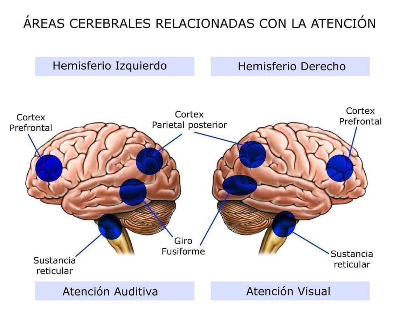 vision y déficit de atención