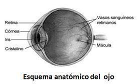 esquema ojo con demae