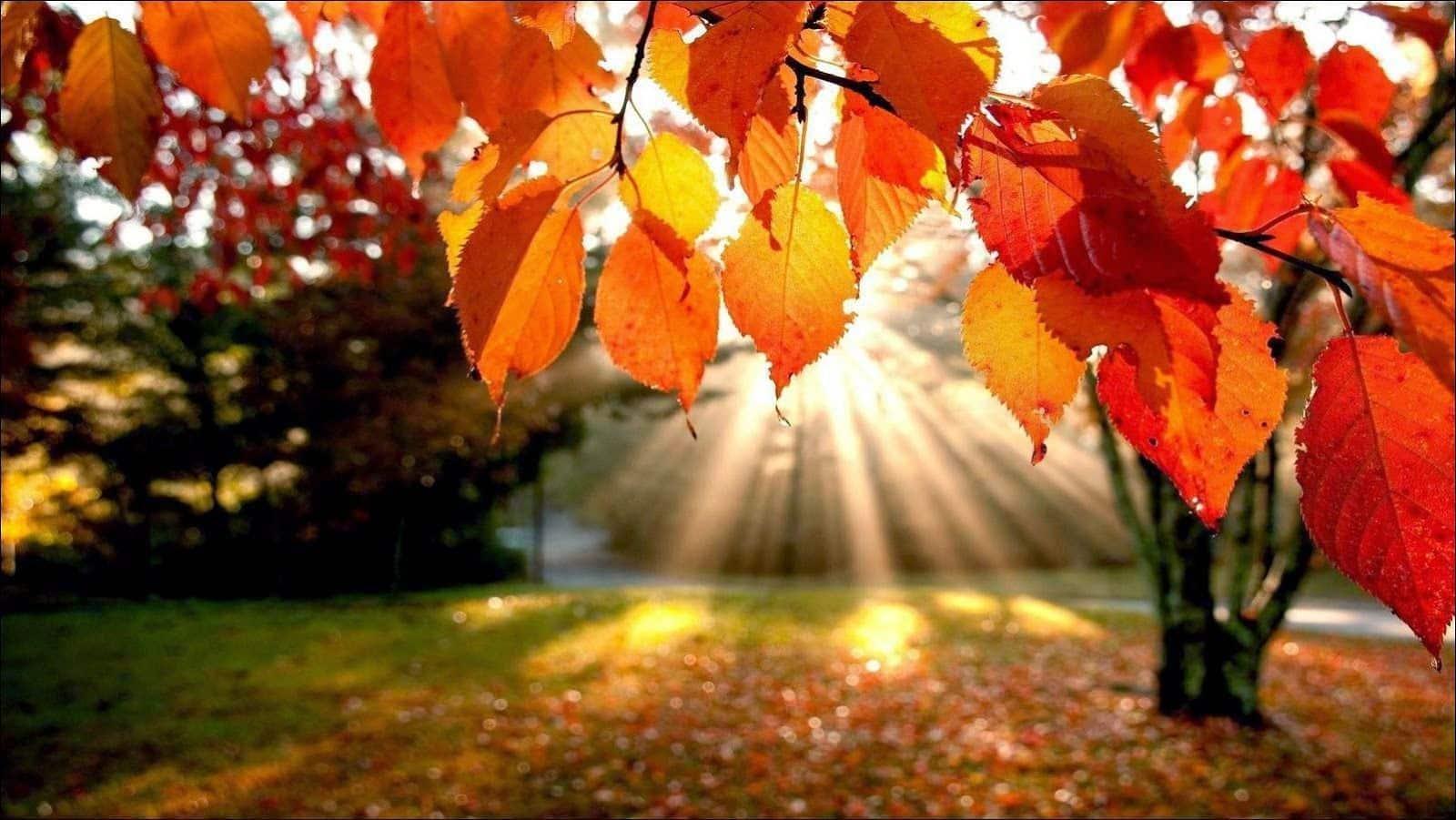 Ojo seco en el otoño