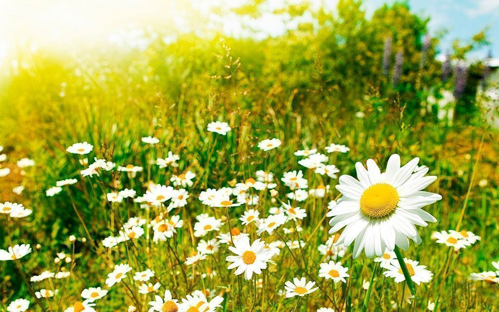 La primavera el ojo seco altera