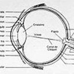 Superficie Ocular, Córnea y Conjuntiva