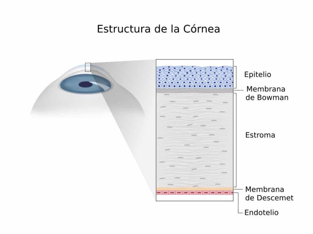 densidad de celulas endoteliales