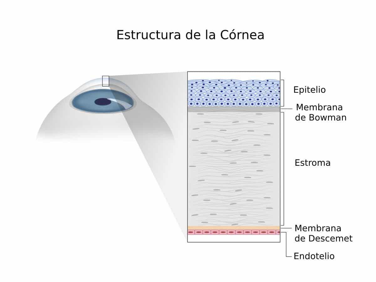 Densidad de células endoteliales