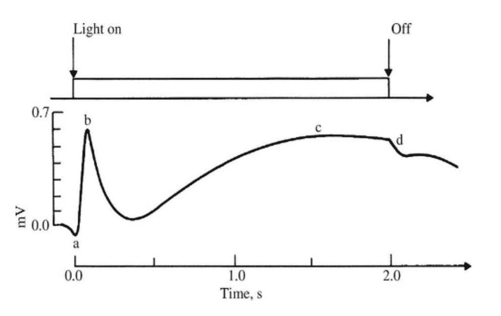 electroretinograma