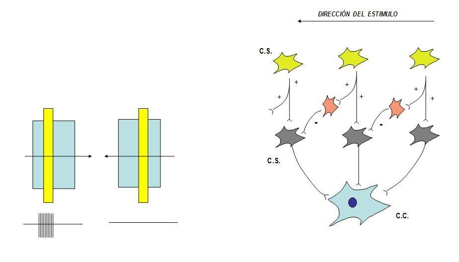 estimulo en las celulas para la via optica