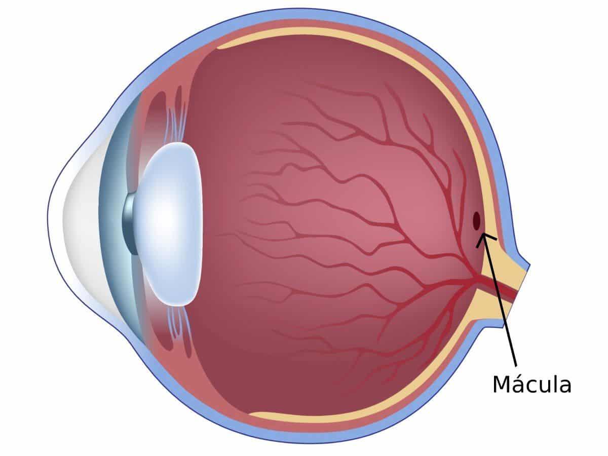Macula Ocular