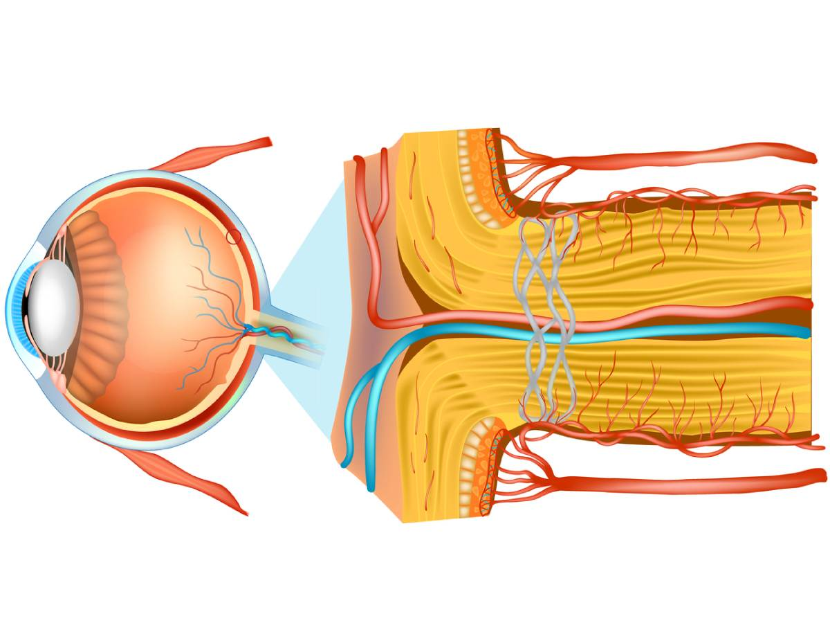 Nervio óptico