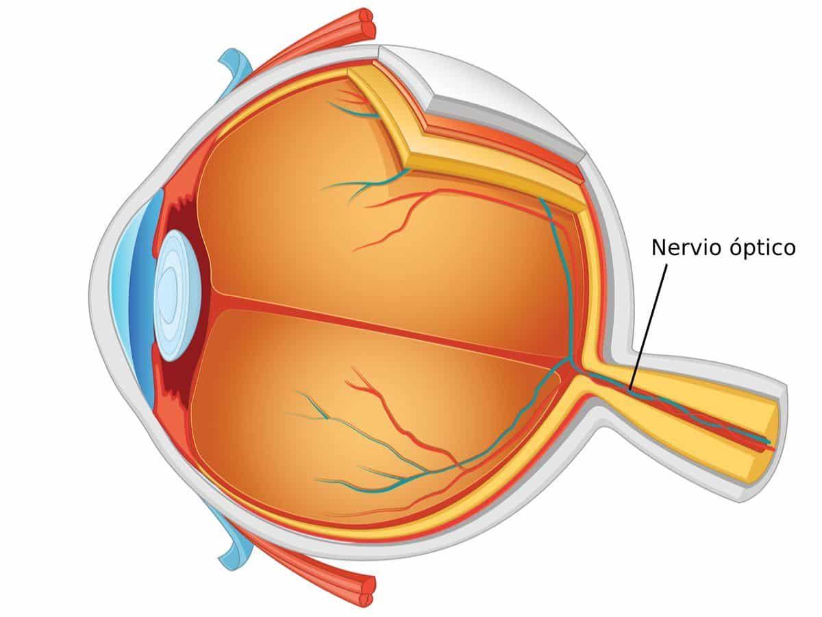nervio optico dañado tratamiento natural