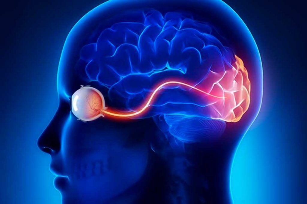 ojo y cerebro