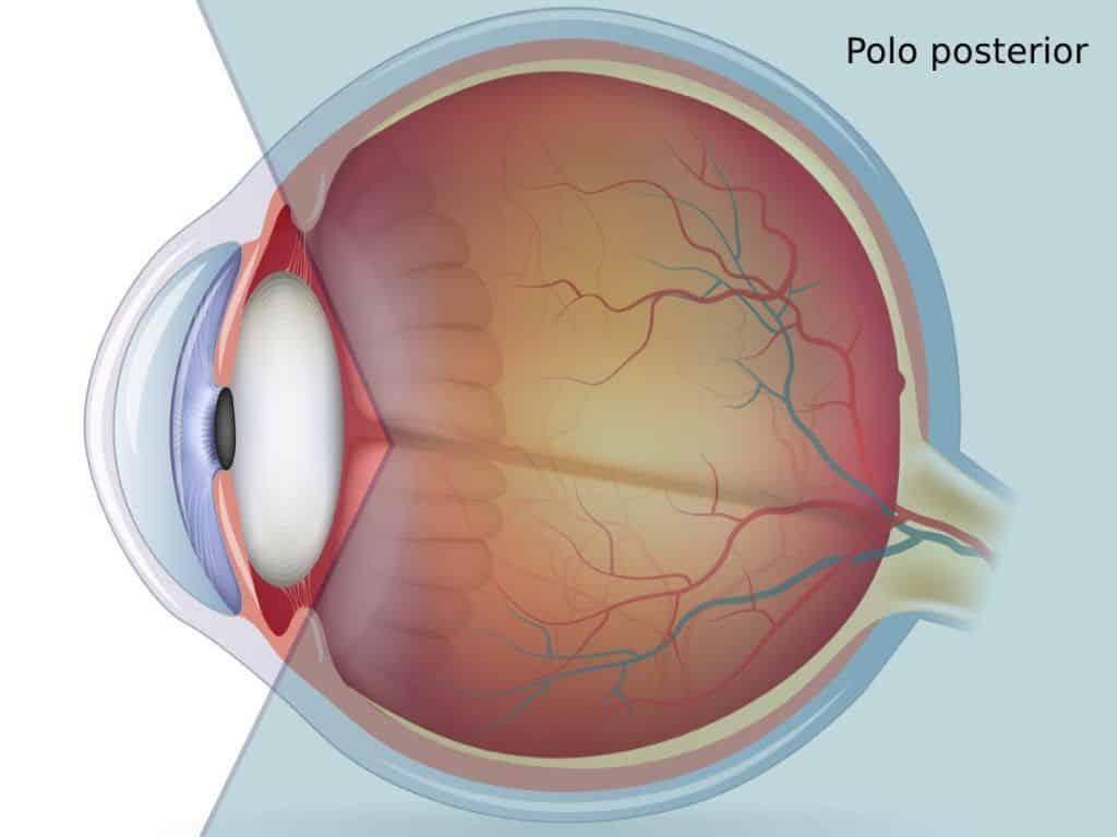 pólo posterior do olho