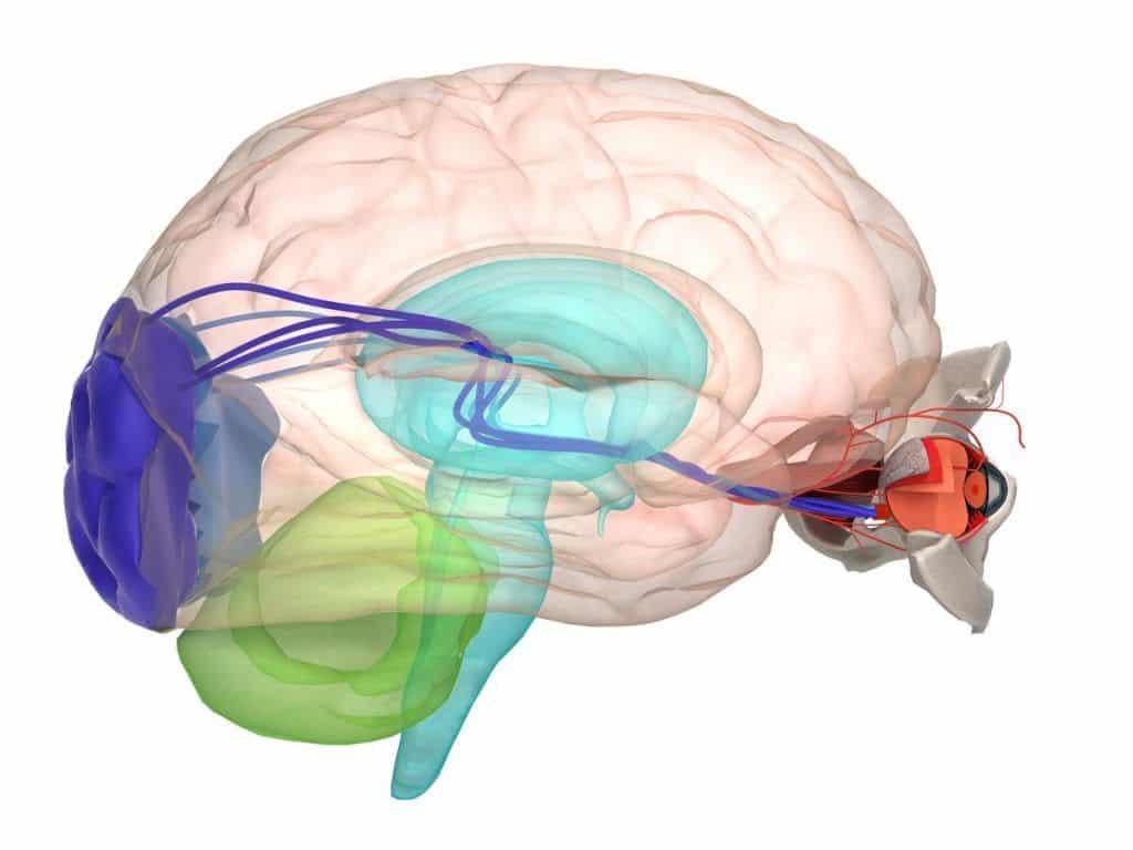 sintomas del nervio optico izquierdo dañado