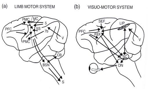 vision y cerebro