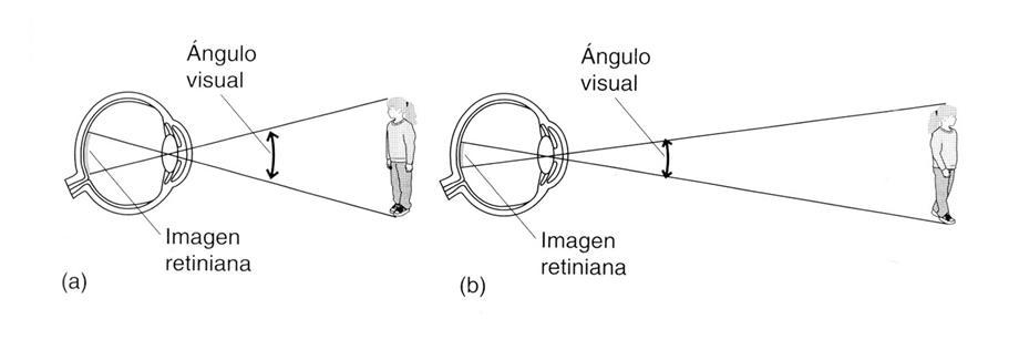 vision y frecuencias espaciales